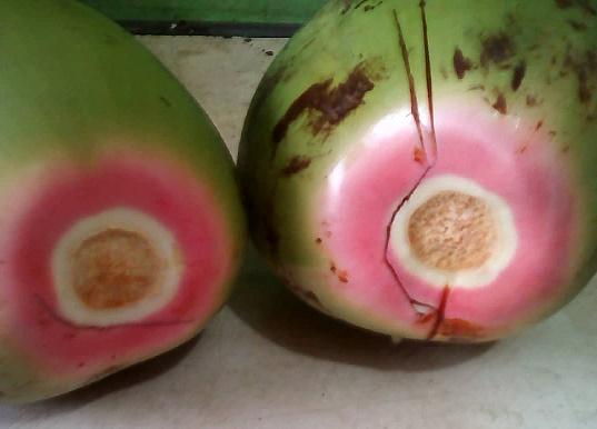 bibit Kelapa wulung dikenali dari sabut kelapa yang berwarna merah muda atau pink. Buah Kelapa wulung sangat baik untuk menetralisir racun, obat empedu, batu ginjal dan suplemen ibu hamil.