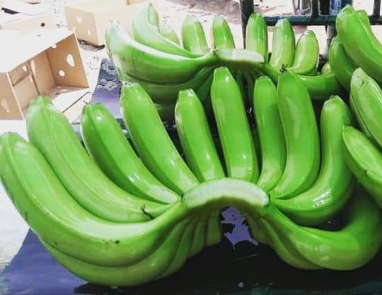 jual bibit pisang cavendish WA 0857 4775 7565