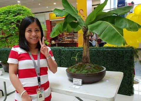 it pisang cavendish dalam pot muncul dari ide kreasi unik pecinta bonsai. Pernahkah terbayang pohon pisang di dalam Pot?